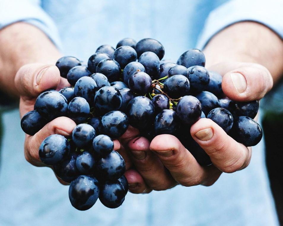Домашнее вино из винограда: рецепт приготовления, проверенный временем