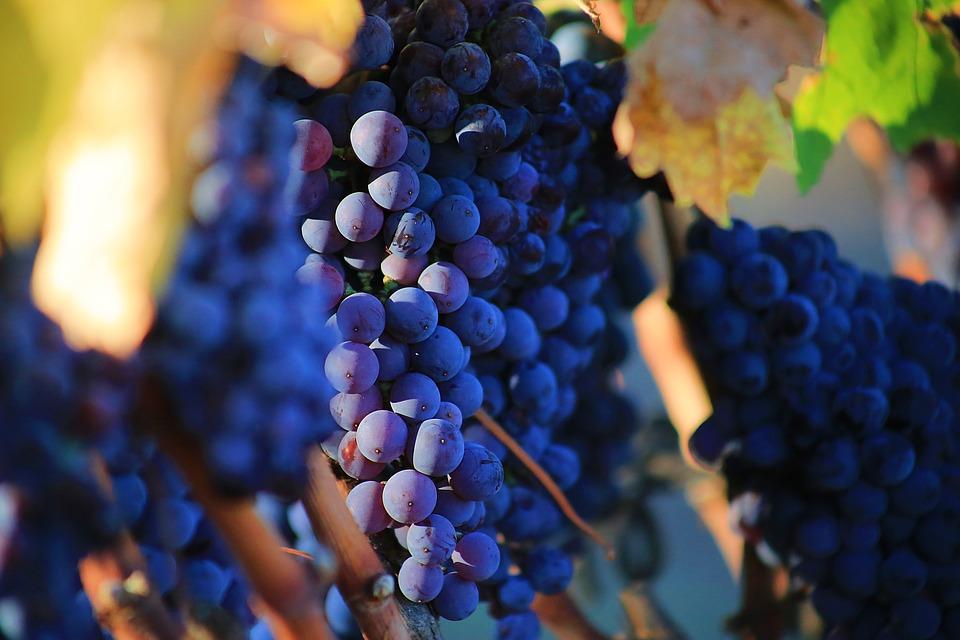 рецепт вина из винограда в домашних условия