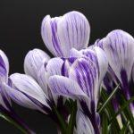 Общий гороскоп на февраль для всех знаков Зодиака: раскрываем душу к весне