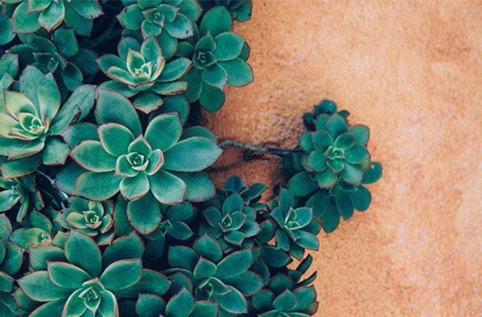 комнатные растения для дома польза