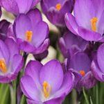 Гороскоп на 7 марта: весенний ветер несет запах счастья