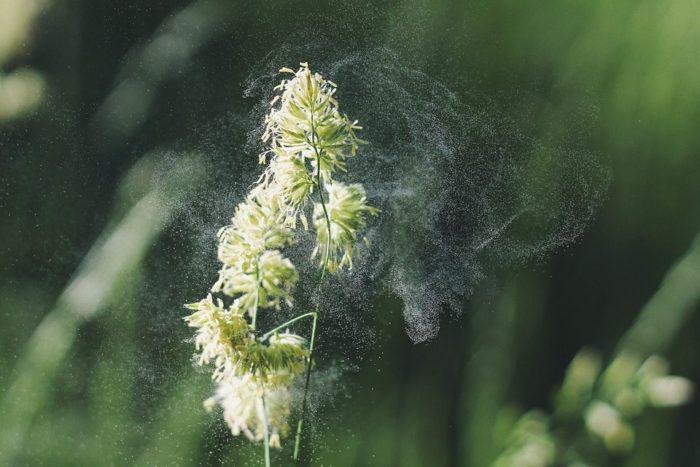 аллергия как убрать симптомы