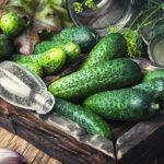 Огурцы: польза и вред любимого зеленого овоща