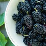 Шелковица: польза и вред любимой летней ягоды