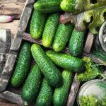 Малосольные огурцы: как вкусно засолить огурчики