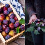 Сливы: польза и вред ароматных плодов