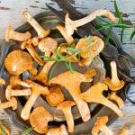 ТОП-5 блюд из лисичек, которые надо попробовать каждому