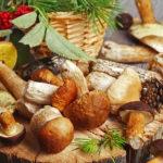Начинаем сезон: виды съедобных лесных грибов, которые надо знать всем