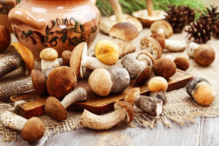 лесные грибы рецепты