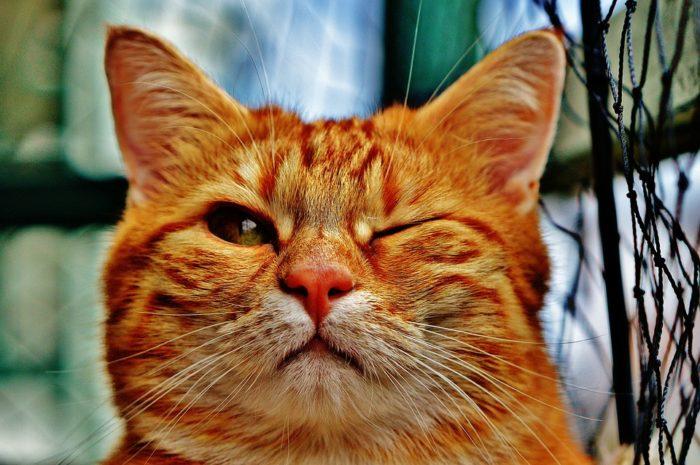 всемирный день кошек дата