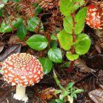 Что делать при отравлении грибами