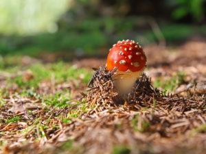 отравление грибами что делать