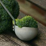 Брокколи: полезные и опасные свойства для организма