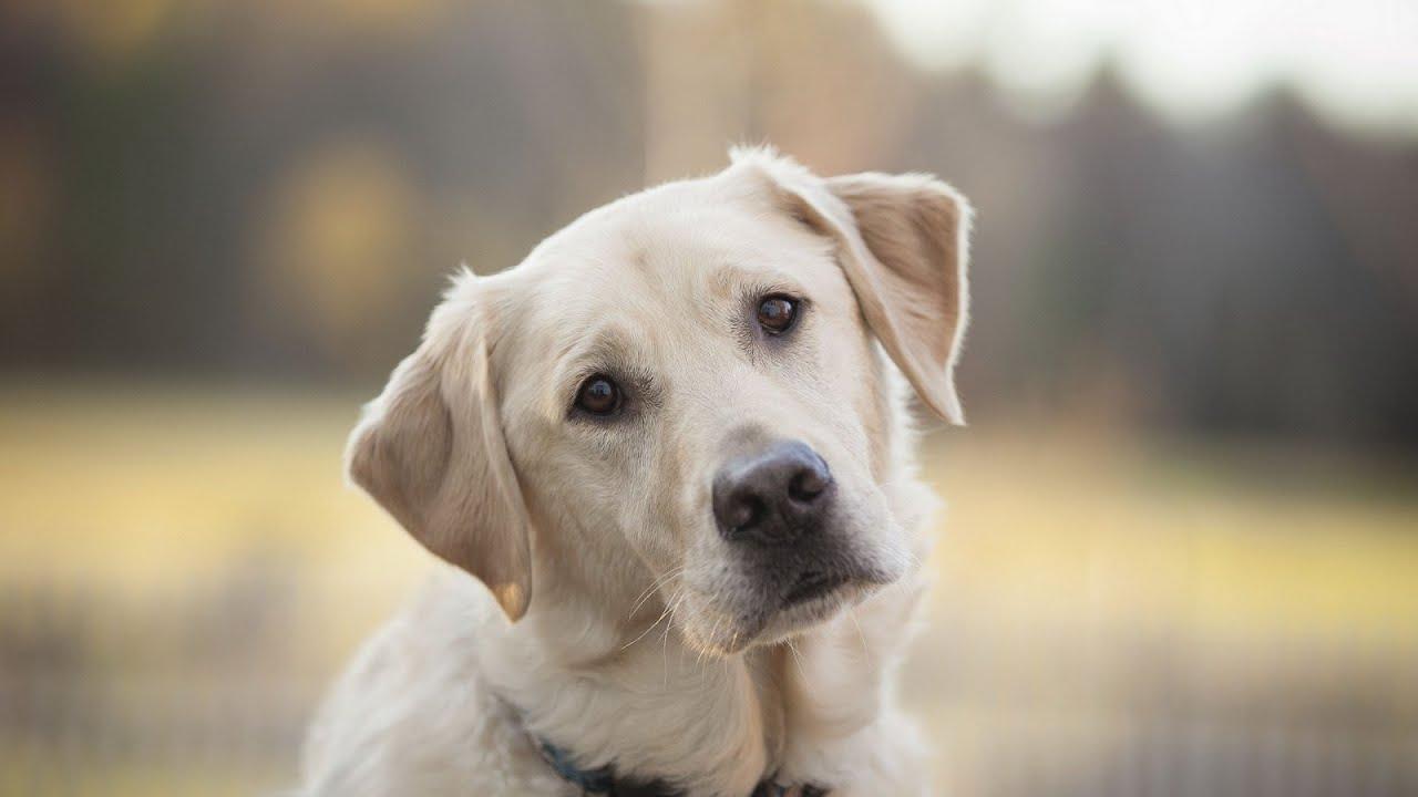Лучшие породы собак для ребенка