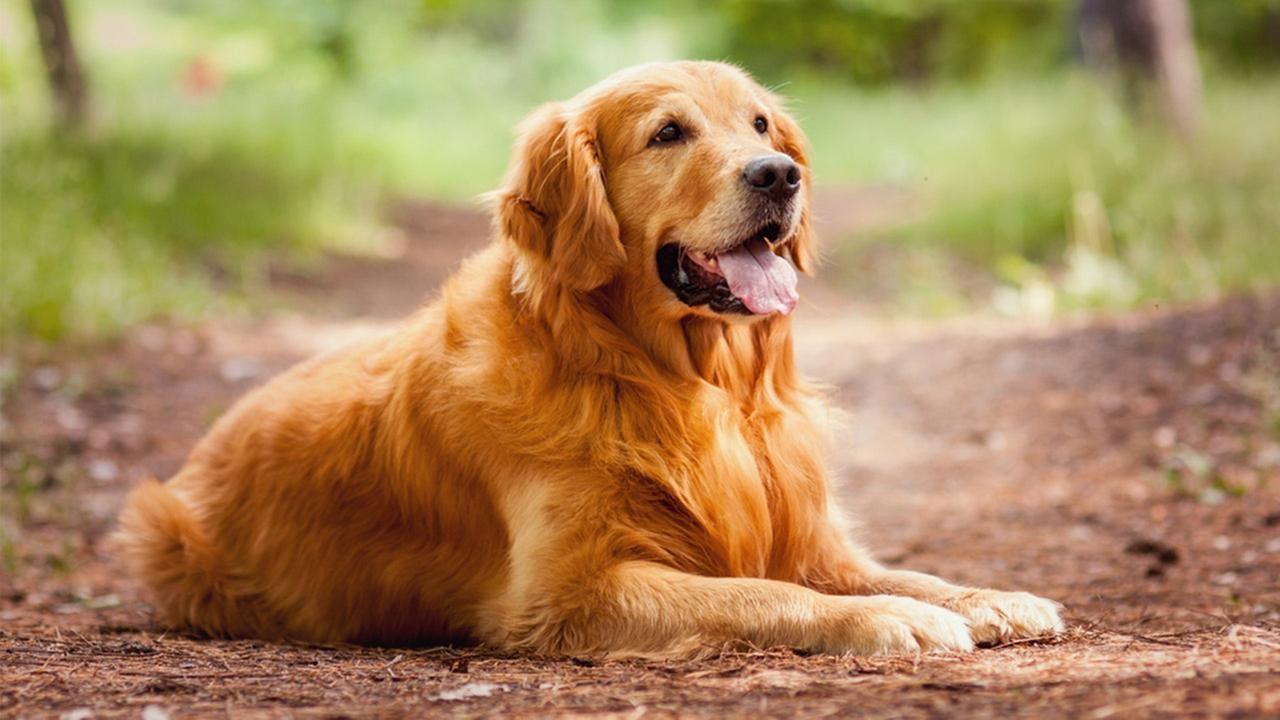доброжелательные собаки виды