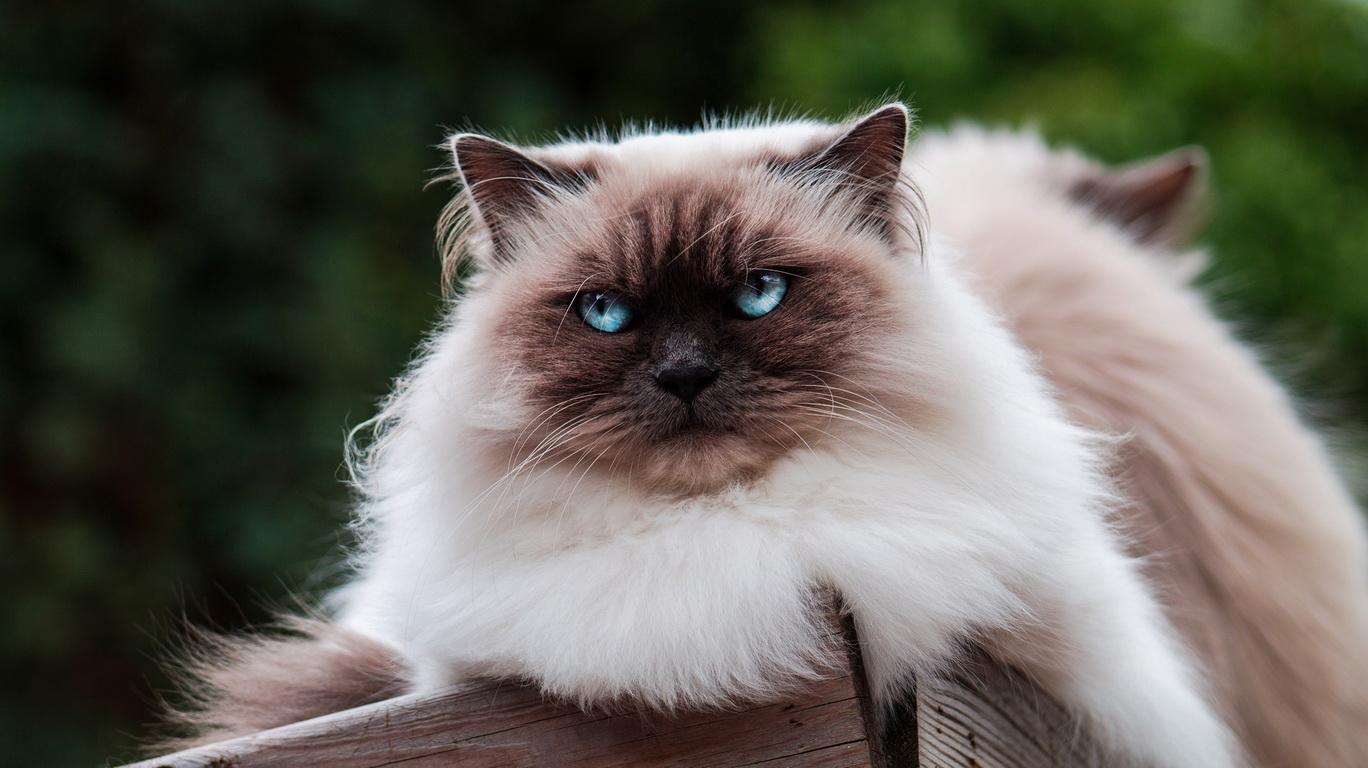 кошки для аллергиков