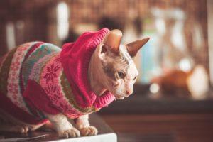 коты для аллергиков