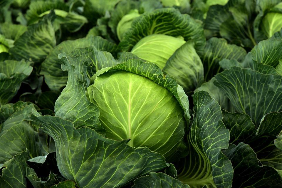 сырые продукты польза для организма