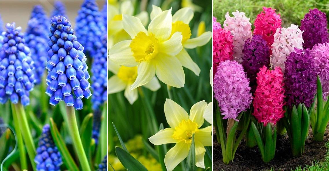 10 растений, которые зацветают в саду раньше всех весной