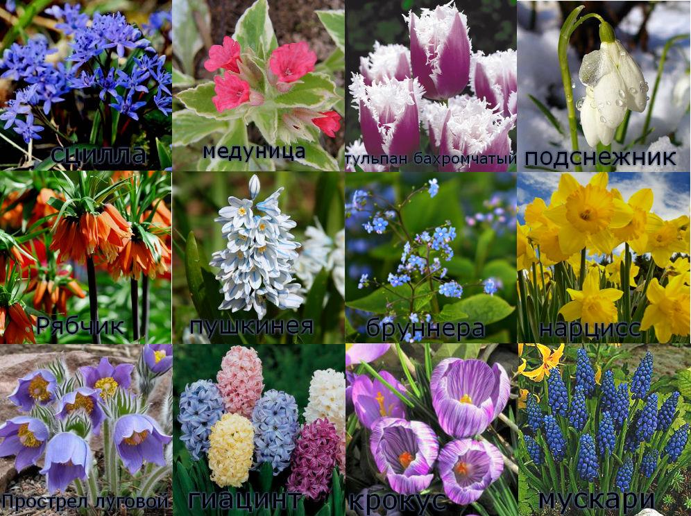 купить цветы для клумбы