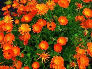 цветы высаживать на улицу