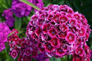 как красиво высадить цветы