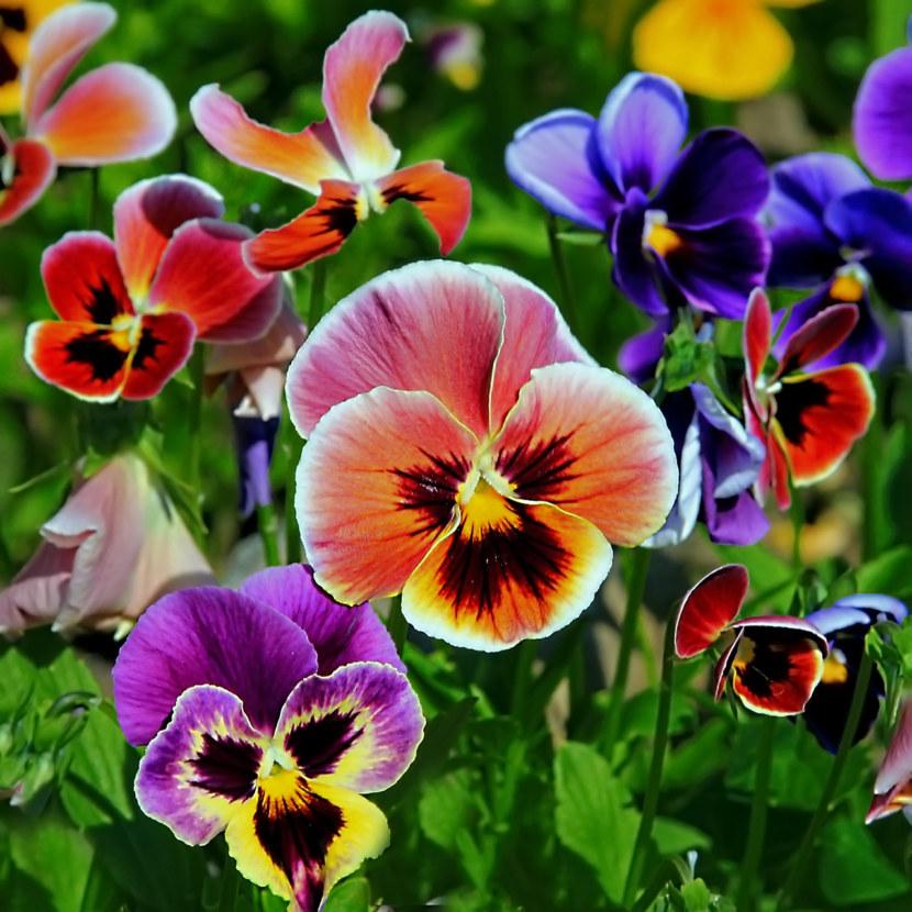 какие цветы высаживают на клумбе