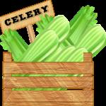 Сельдерей: польза и вред для организма