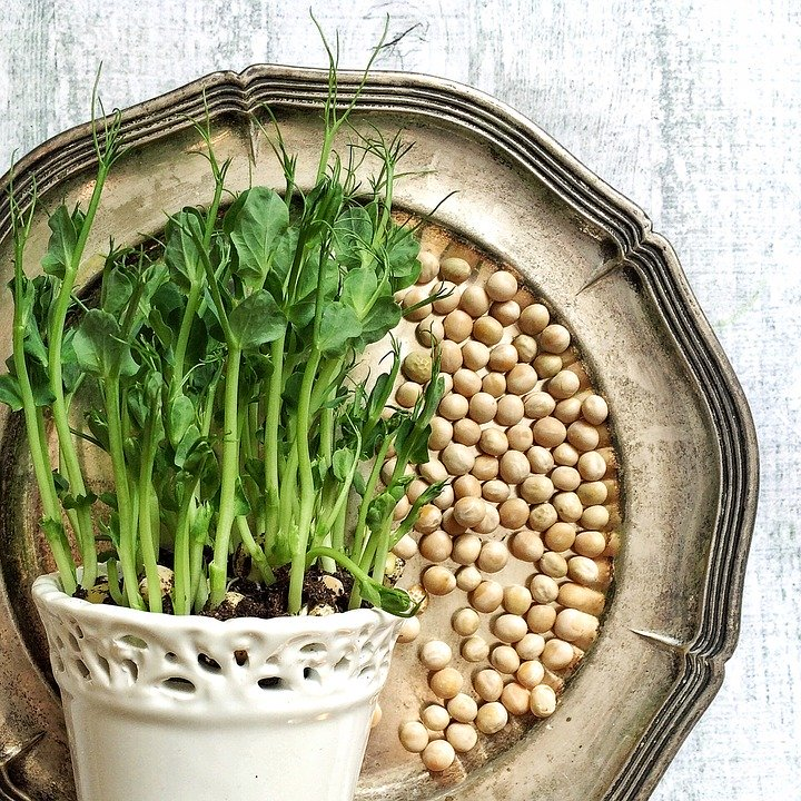 как вырастить микрозелень в домашних
