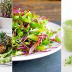 Самые аппетитные фото микрозелени, которые точно заставят вас добавить трендовый суперфуд в свой рацион