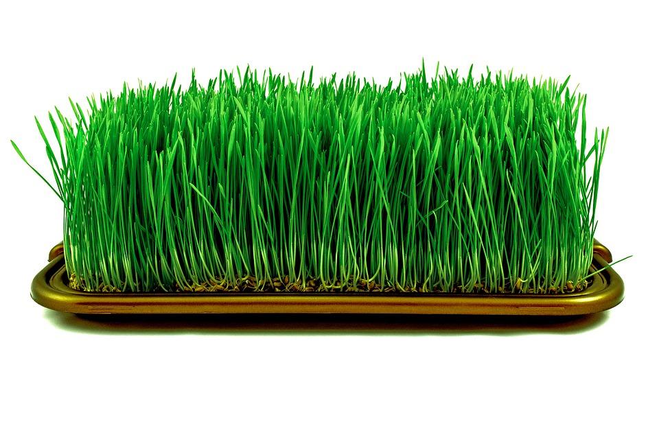 микрозелень дома