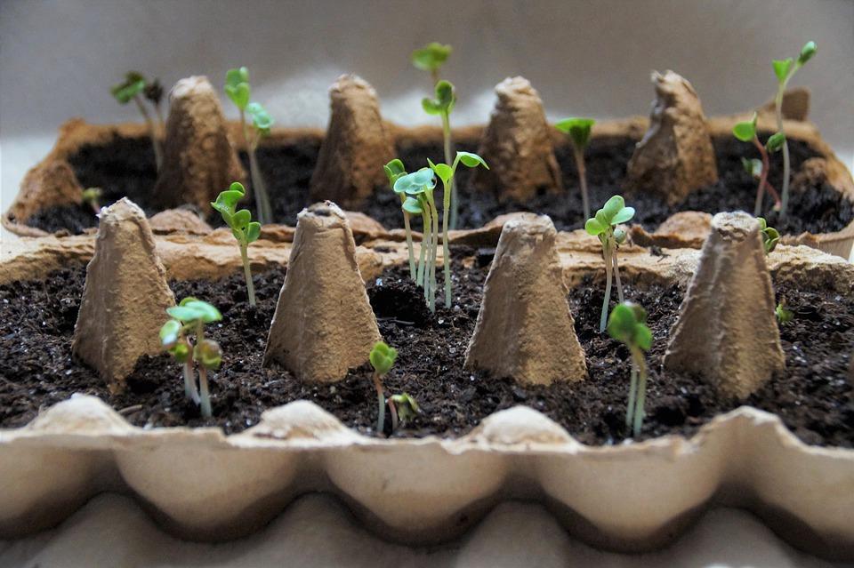 микрозелень в домашних