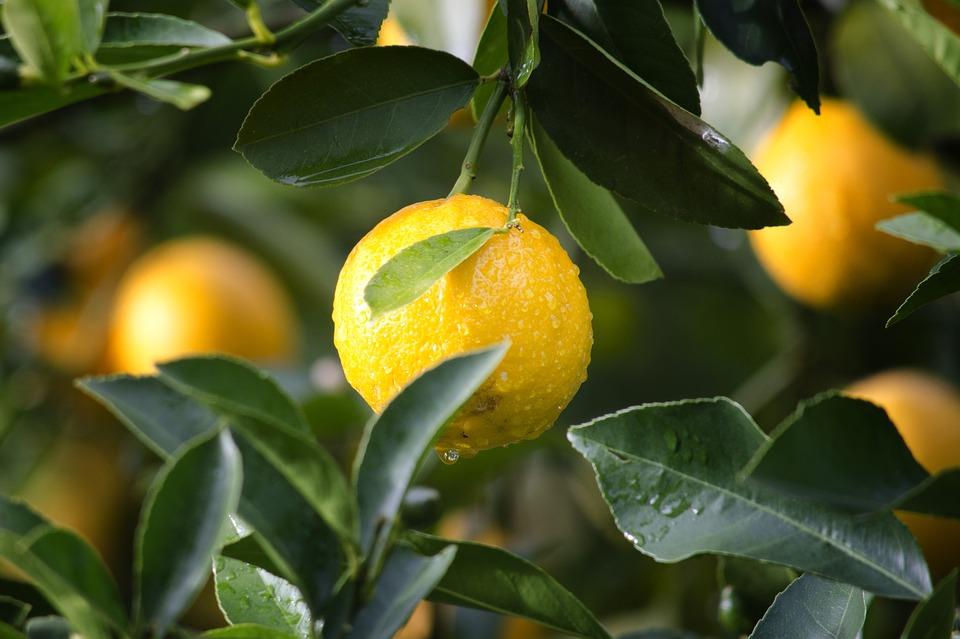 лимон полезные свойства