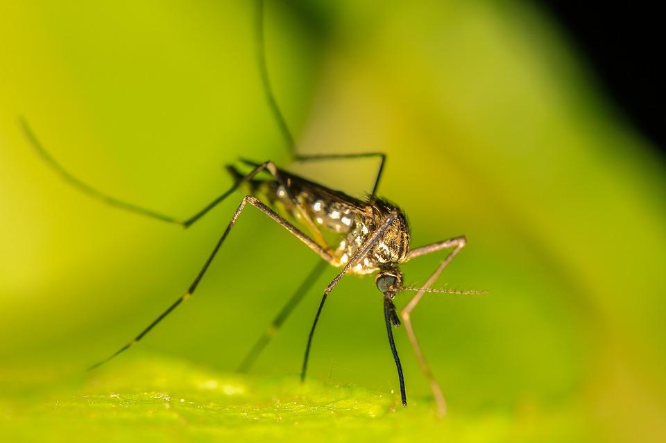 вред комаров