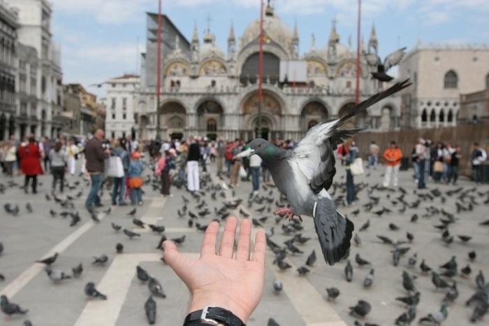 туристы за границей правила поведения