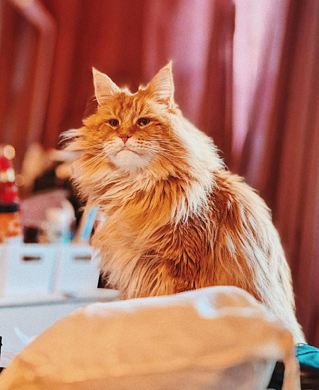 международный день котов