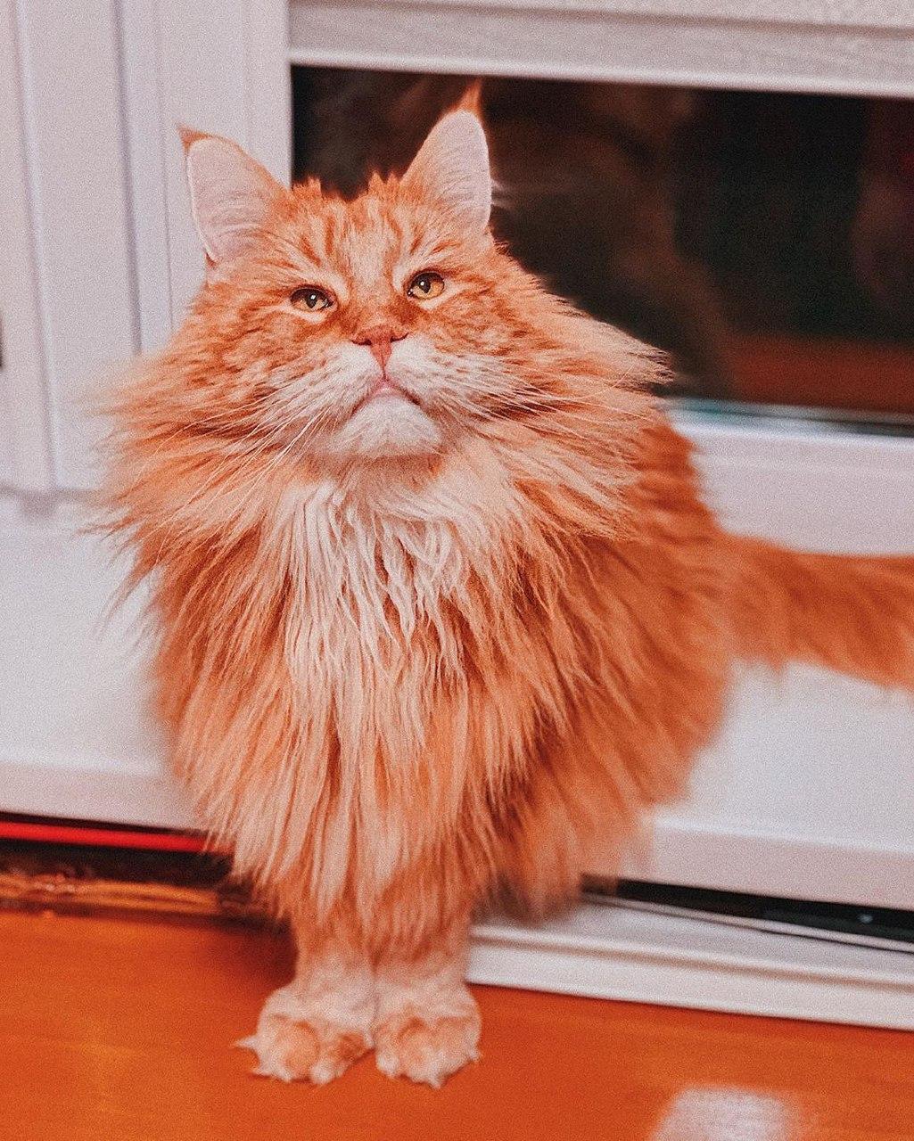 всемирный день котов и кошек