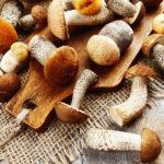 Лесные грибы: полезно ли их есть?