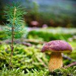 Что делать, если потерялись в лесу: советы эксперта
