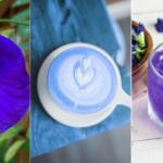 Синий чай: все, что вы хотели знать о тренде соцсетей