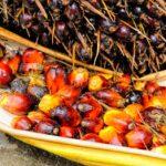Чем вредно пальмовое масло и как минимизировать его влияние на организм?