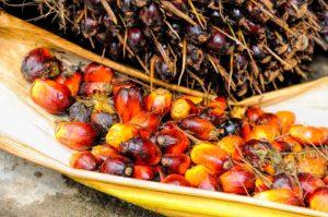пальмовое масло вред для организма