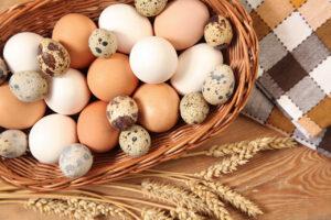 вред яиц для организма
