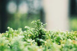 как сделать стабилизированный мох