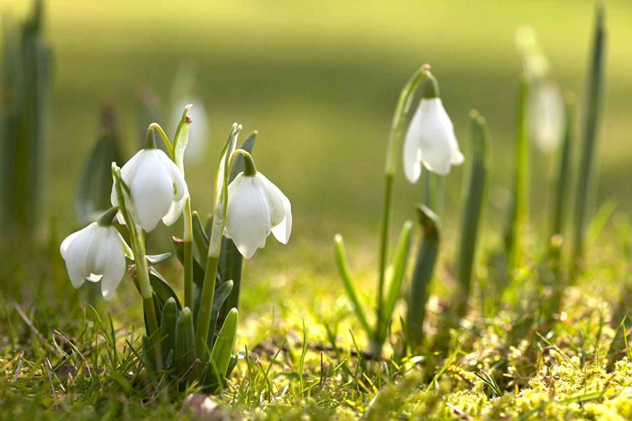 Народные приметы 11 марта: прислушайтесь к знакам природы