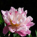 Народные приметы о весне, которые стоит знать каждому