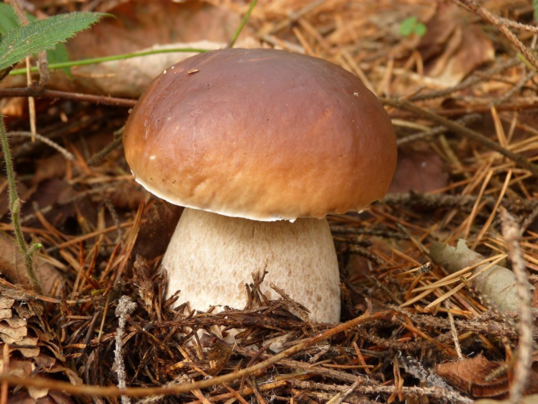 рецепт черной пасты с грибами