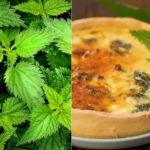 Пирог с крапивой: рецепт Григория Германа