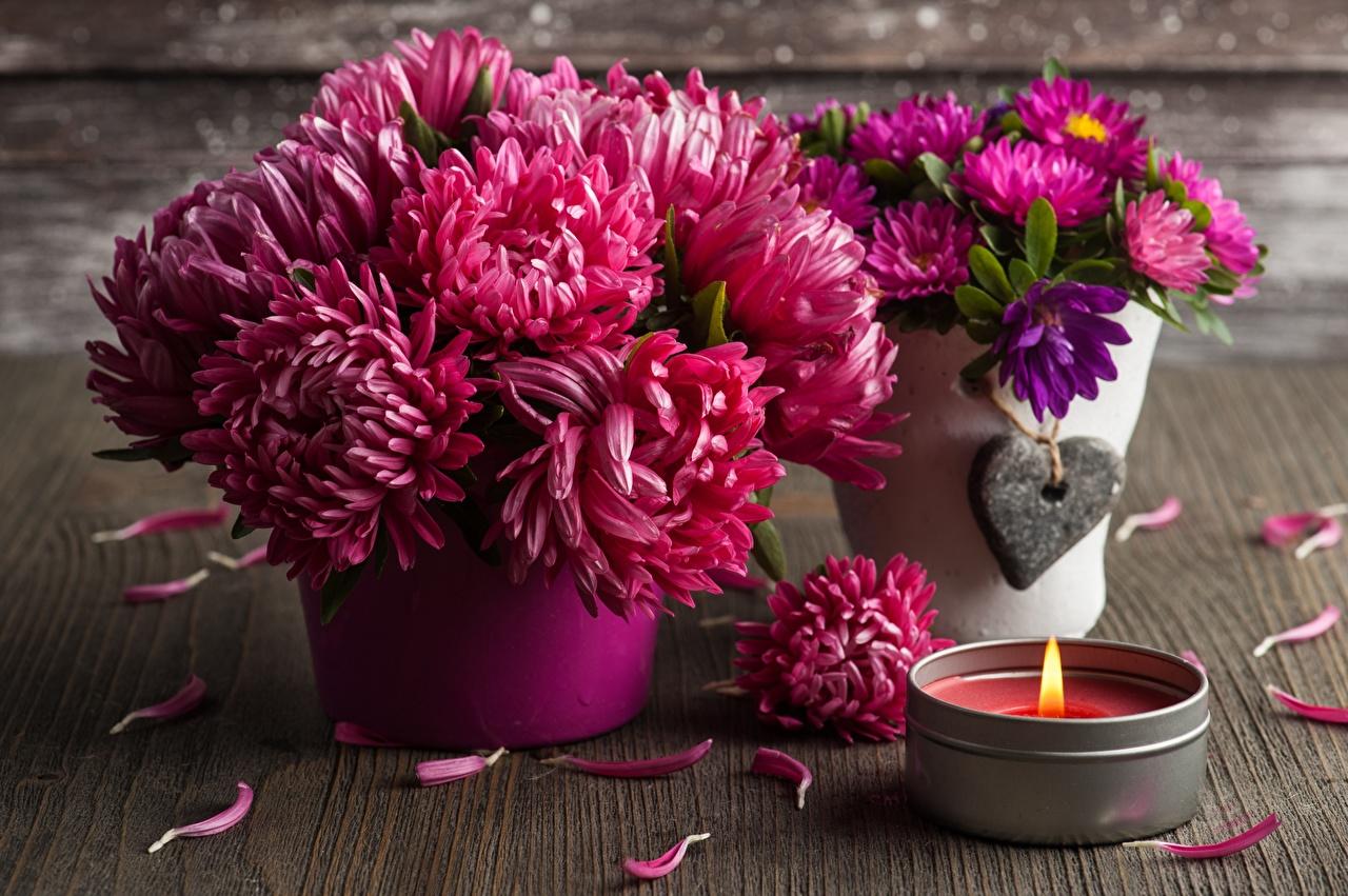 день хризантем
